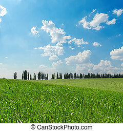 agricultural green field and clouds in blue sky