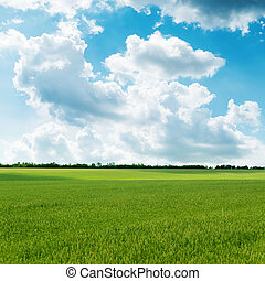 agricultural green field and cloudy sky