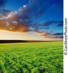 agricultural green field and sunset