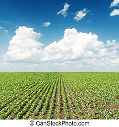 agricultural green field and white clouds in blue sky