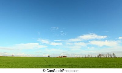 Agricultural green field - time lapse