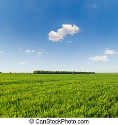 agricultural green grass field and blue sky with clouds