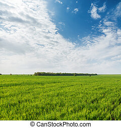 agricultural green grass field and clouds in blue sky
