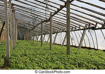agricultural greenhouse in rural areas, north china