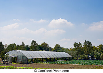Agricultural Greenhouse on a smallholding with cabbage crops...