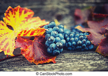 Agricultural harvest at countryside with ripe grapes and leaves. Vintage effect