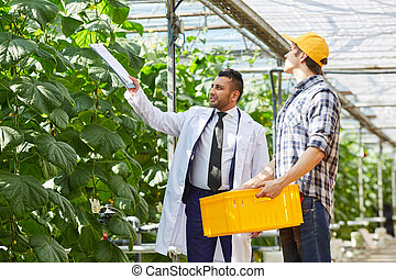 Agricultural inspector talking to greenhouse worker