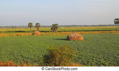 Agricultural land in India. Kerala - Agricultural land in...
