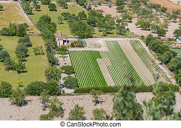 Agricultural land in Mallorca, Spain - Panoramic view of...