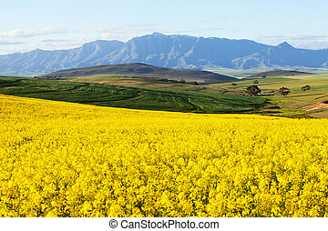 Agricultural land overlooking snow capped mountain range -...