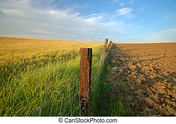 agricultural landscape - afternoon field in a farming area