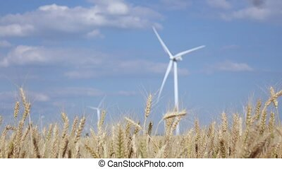 Agricultural landscape in a golden field of wheat and wind turbines