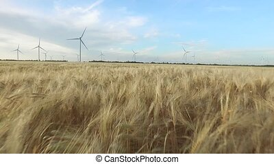 Agricultural landscape in a golden field of wheat and wind turbines on the background of clear sky. Aerial survey. Close up