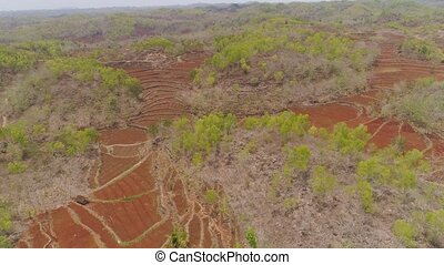 agricultural landscape in asia - aerial view agricultural...
