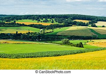 Agricultural landscape in summer
