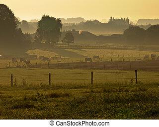 agricultural landscape misty sunrise