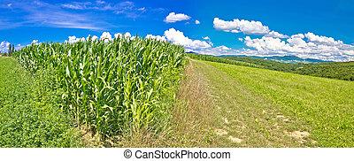 Agricultural landscape panorama in Prigorje region, corn...