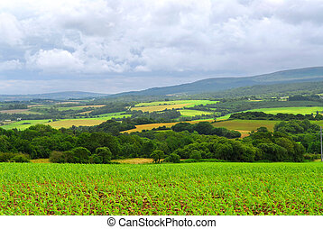 Agricultural landscape - Scenic view on summer agricultural ...
