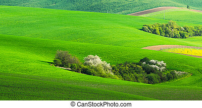 Agricultural landscape with green field and trees