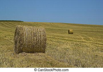 agricultural landscape with blue sk