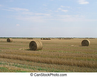 Agricultural landscape with straw bales in a field.
