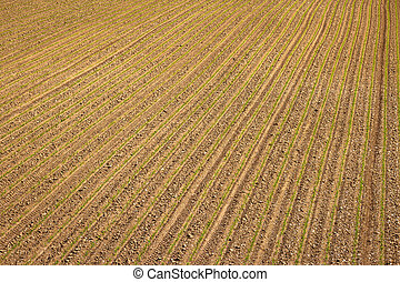 Agricultural layer view od plowed field