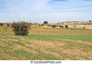 Agricultural mosaic landscape