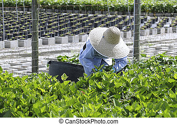 Agricultural Nursery worker - 3