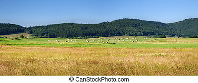 Agricultural panorama in the hills