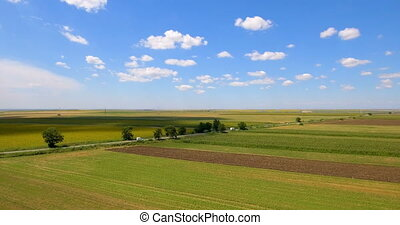Agricultural parcels of different crops in yellow and green...