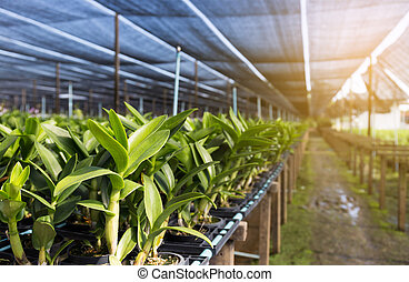 agricultural plants Green growing