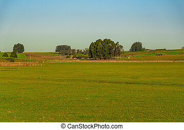 Agricultural production farm fields in southern Brazil - ...