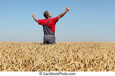 Agricultural scene, farmer in wheat field, harvest time