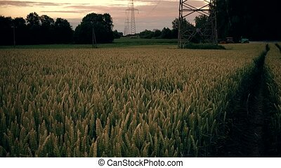 Agricultural tractor spaying wheat field near high voltage...