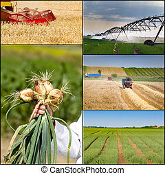 Agricultural work collection - Collage of agricultural work...