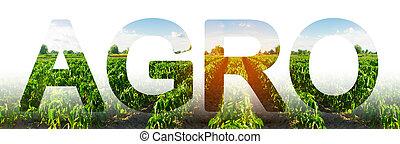 agriculture., 景色。, 薮, 成長する, 農業, 穀物, agro., 農業, 横列, 農事産業, フィールド, コショウ, プランテーション, 単語, 美しい, vegetables.