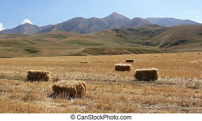 Agriculture 1 - Hay Bales in Farm Field