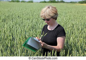 agriculture, agronomie, exprert, dans, blé