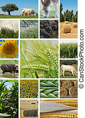 Agriculture and animal husbandry. - Collage with pictures...
