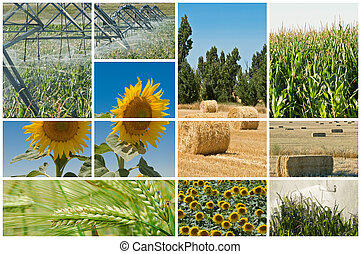 Agriculture and ecology. - Collage made of photos about...
