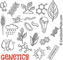 Agriculture and genetic technology sketch icons