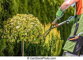 Garden Trees Shaping by Caucasian Professional Gardener