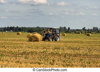 Agriculture and tractor collects straw bales on the farm...