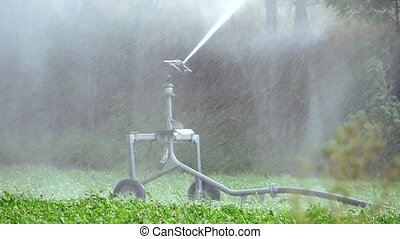 agriculture, automatic irrigation - Agriculture. Farming....