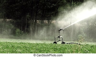 agriculture, automatic irrigation