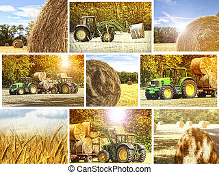 agriculture background - fine image of different agriculture...