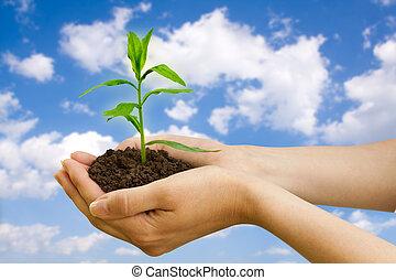 agriculture., berendezés, alatt, egy, kéz