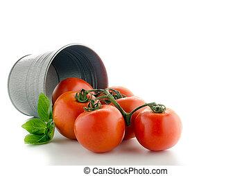 bucketful of fresh ripe tomatoes, isolated on white background