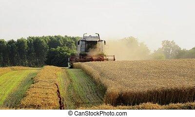 agriculture, combine harvester - Agriculture, farmland,...