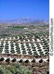 agriculture, dans, crète, greece.